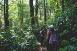 Forest Trekking Tour Packages